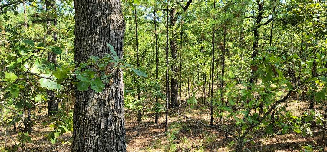 Active   20 ACRES OFF GRID HUNTING PARADISE Bengal, OK 74563 5