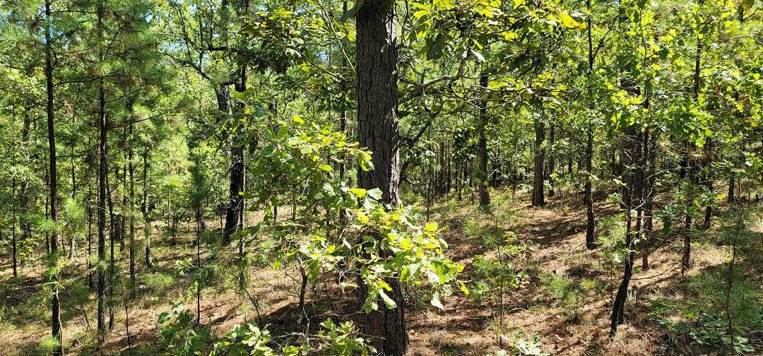 Active   20 ACRES OFF GRID HUNTING PARADISE Bengal, OK 74563 6