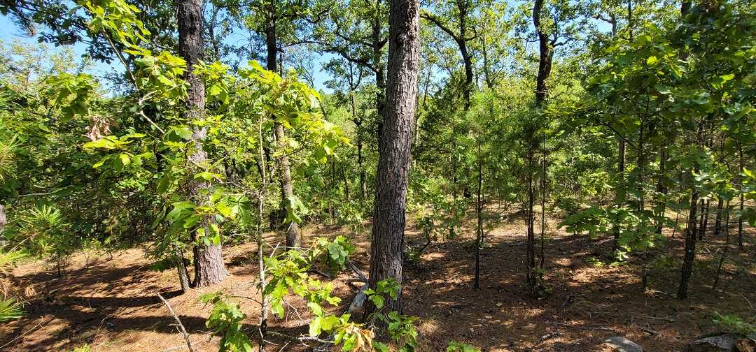 Active   20 ACRES OFF GRID HUNTING PARADISE Bengal, OK 74563 7