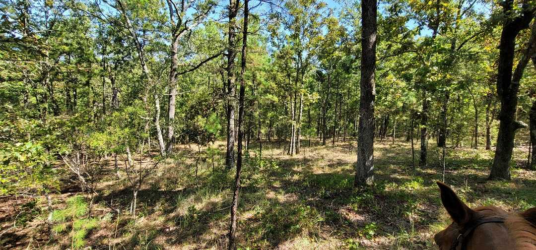 Active   20 ACRES OFF GRID HUNTING PARADISE Bengal, OK 74563 8