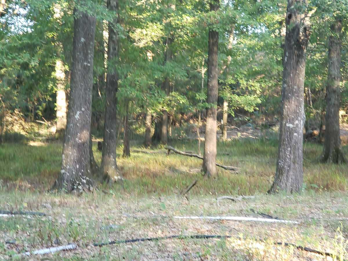 Active   000 Cemetery Rd Albion, OK 74521 15