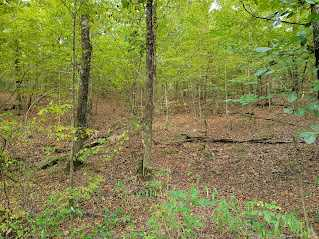 Land, Hunting land, Recreational Land, Oklahoma creek land | Kiamichi Wilderness Area Moyers, OK 74557 9