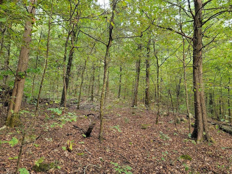 Land, Hunting land, Recreational Land, Oklahoma creek land | Kiamichi Wilderness Area Moyers, OK 74557 13