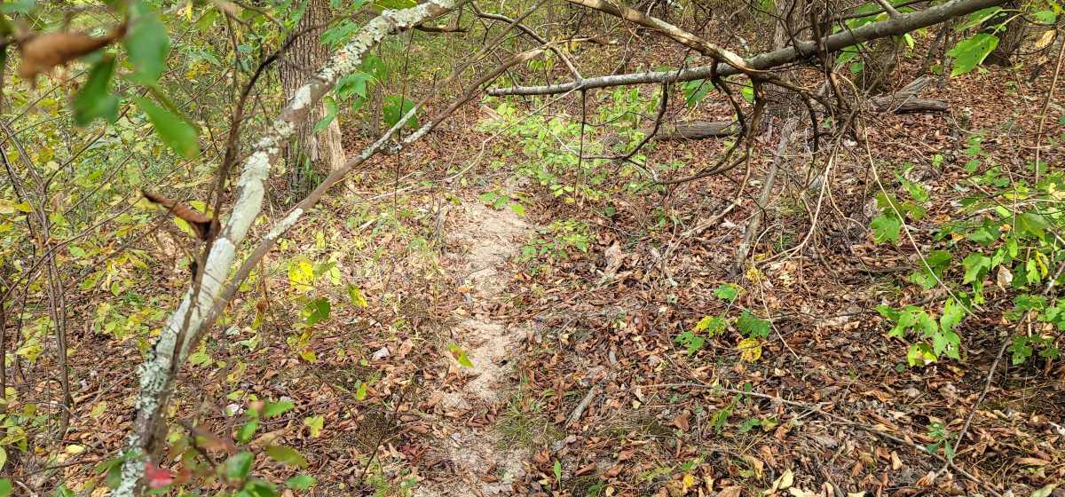 Land, Hunting land, Recreational Land, Oklahoma creek land | Kiamichi Wilderness Area Moyers, OK 74557 6