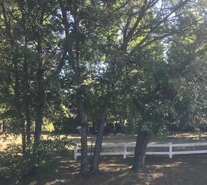 Sold Property | 204 Pine Street Tioga, Texas 76271 2