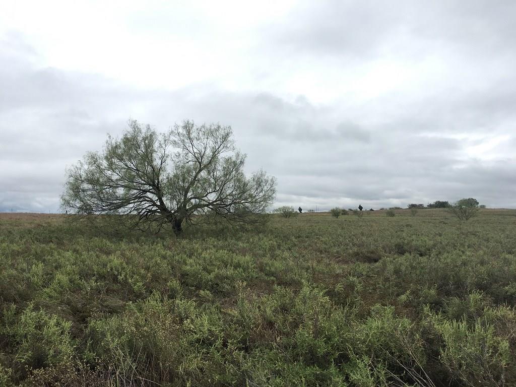 Active | 0000 Hwy 103  Nocona, Texas 76255 8