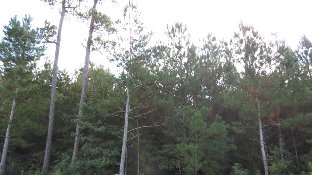 Active | TBD Grand View Trail Huntsville, Texas 77340 10