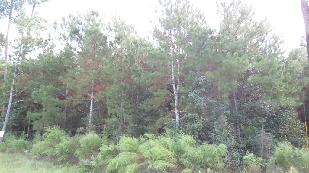 Active | TBD Grand View Trail Huntsville, Texas 77340 6