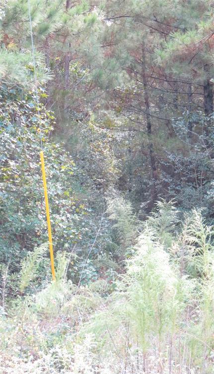Active | TBD Grand View Trail Huntsville, Texas 77340 7