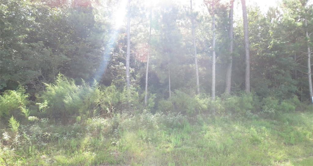 Active | TBD Grand View Trail Huntsville, Texas 77340 8