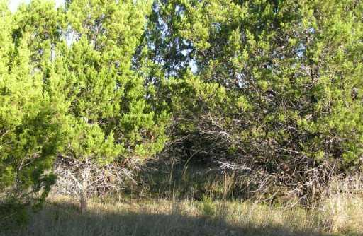 Sold Property | 0 New Mexico  Other, TX 77871 0