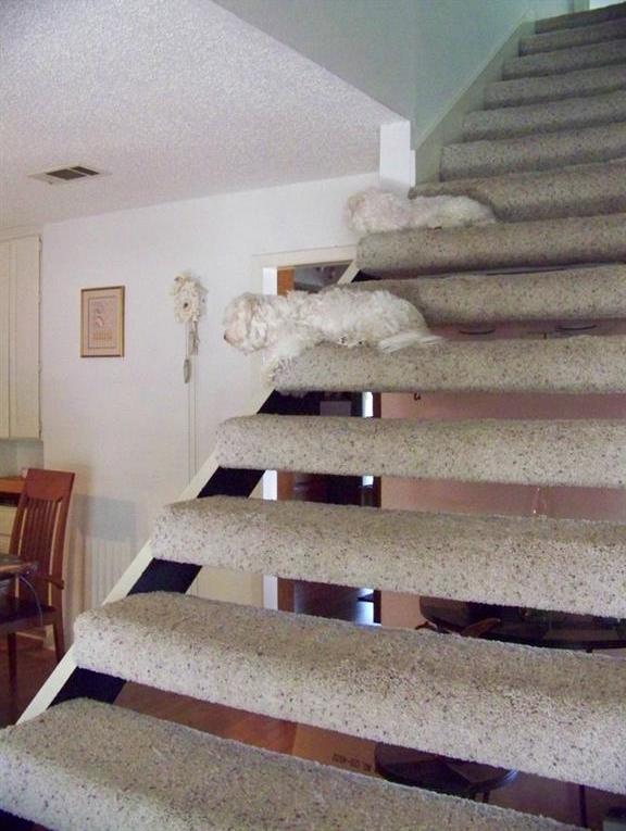 Sold Property | 2203 Doral DR Austin, TX 78746 6