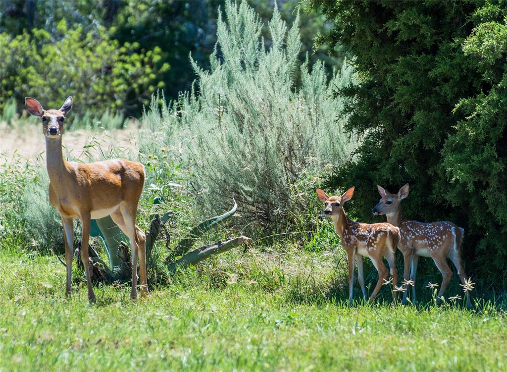 Active | Lt 184 PK Boulevard Possum Kingdom Lake, TX 76449 8