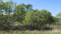 Withdrawn | 110 ROYAL  Cedar Creek, TX 78612 1