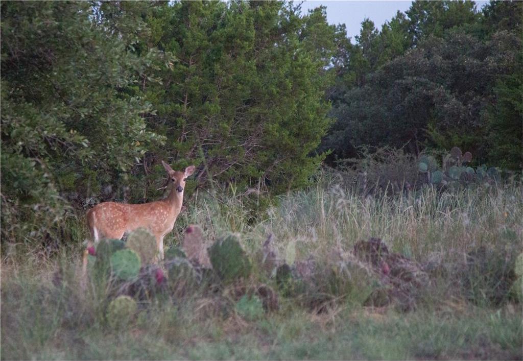 Active   222 Castle Harbour Drive Possum Kingdom Lake, Texas 76449 16