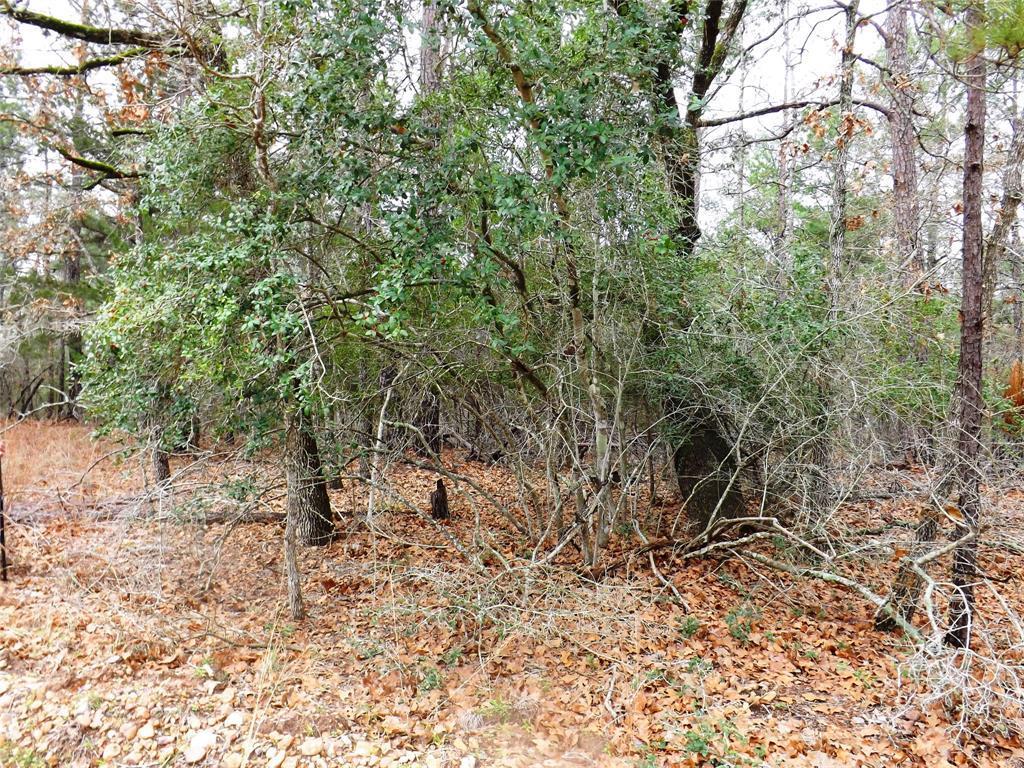Sold Property | 00 Stephen Lane La Grange, Texas 78945 3