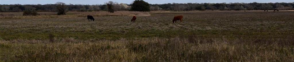Active | 00 County Rd 147 Landfill Road Van Vleck, Texas 77414 9