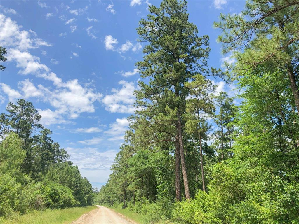 Active | 0 Lost Indian Camp  Road Huntsville, TX 77320 13
