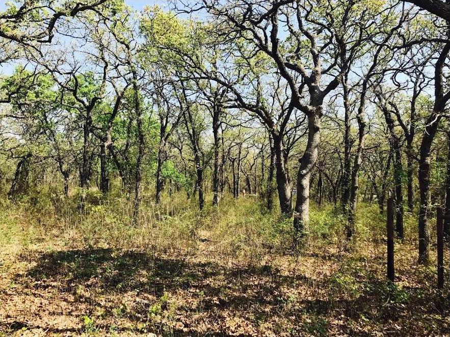 Sold Property | Lot 19 Joy Trail Paradise, Texas 76073 2