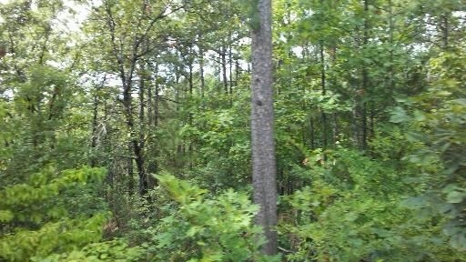 large hunting, hunting land, pond creek, trails, wooded property | Indian Hwy Albion, OK 74571 4