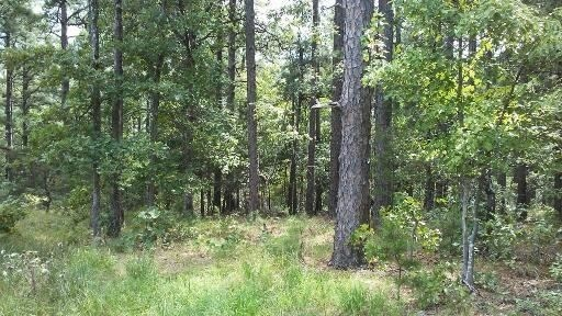 large hunting, hunting land, pond creek, trails, wooded property | Indian Hwy Albion, OK 74571 5
