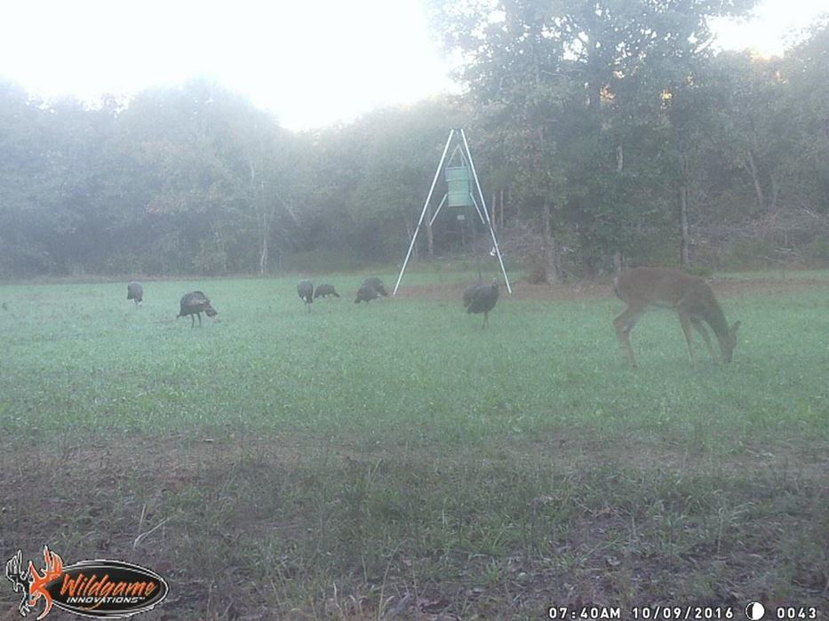 hunting lodge, hunt land deer food trails utilities pond game  | Oklahoma Hill Country Gerty, OK  5