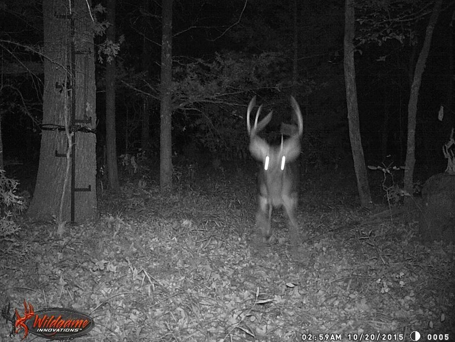 hunting lodge, hunt land deer food trails utilities pond game  | Oklahoma Hill Country Gerty, OK  7