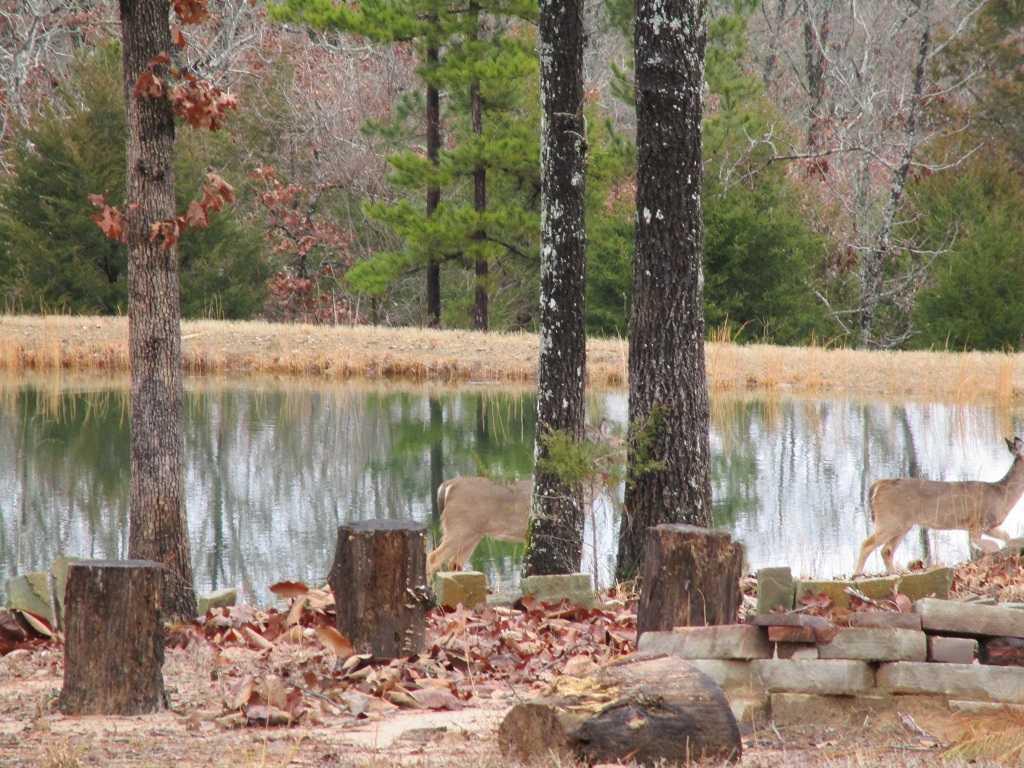 air B & B country, hunting lodge, water front cabin, cabin, fish | Hwy 271 Divide, Oklahoma, Oklahoma 74567 61