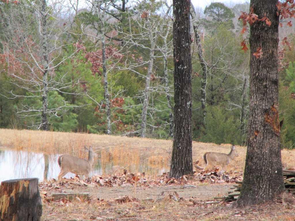air B & B country, hunting lodge, water front cabin, cabin, fish | Hwy 271 Divide, Oklahoma, Oklahoma 74567 62