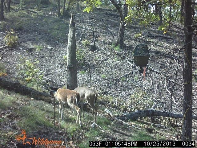 Active | The Oklahoma Tetons! Talihina, OK 74571 0