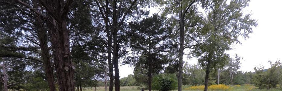Active | 165329 SH2 Clayton, Oklahoma  9