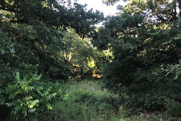 Wooded 33 Acre Ranch for Sale near Durant, OK | 9450 S Eli Road Coleman, OK 73432 7