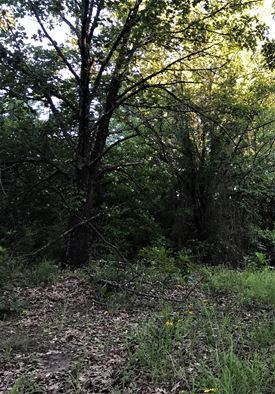 Wooded 33 Acre Ranch for Sale near Durant, OK | 9450 S Eli Road Coleman, OK 73432 9