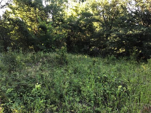 Wooded 33 Acre Ranch for Sale near Durant, OK | 9450 S Eli Road Coleman, OK 73432 10