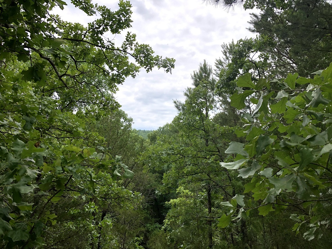 Sold Property | Twin Hills - 120 Acre Hunting Paradise Bengal, Oklahoma,   0
