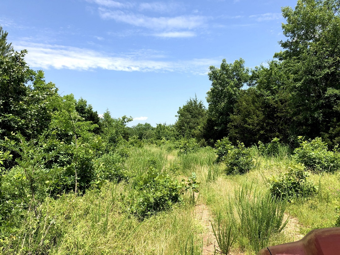 Sold Property | Twin Hills - 120 Acre Hunting Paradise Bengal, Oklahoma,   4