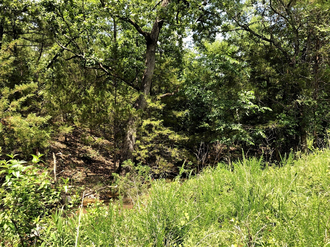 Sold Property | Twin Hills - 120 Acre Hunting Paradise Bengal, Oklahoma,   5