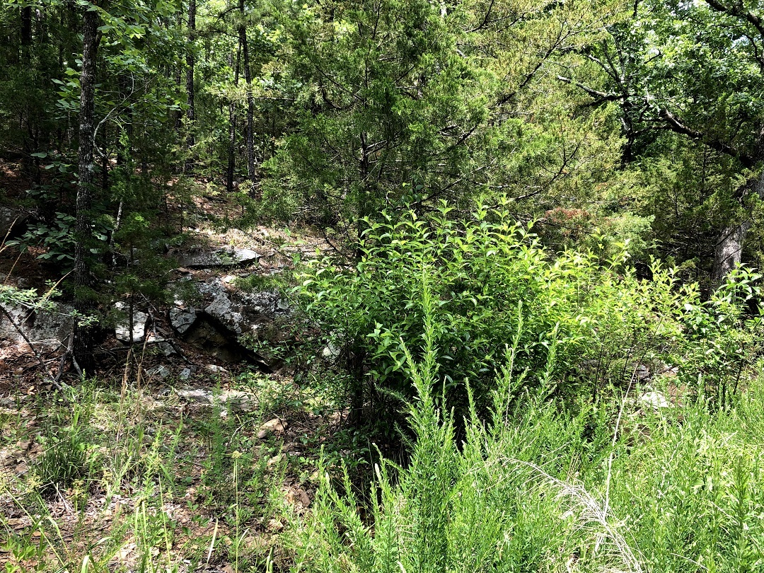 Sold Property | Twin Hills - 120 Acre Hunting Paradise Bengal, Oklahoma,   6
