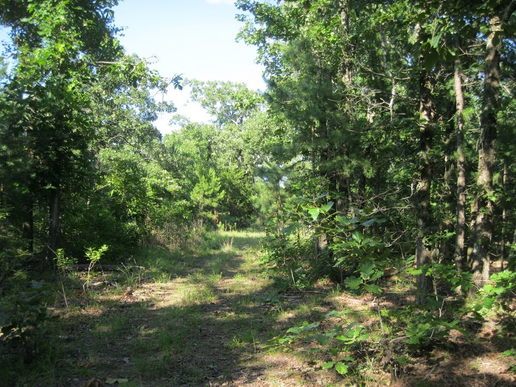 Active | 80 Acres Remote Hunter's Paradise Clayton, OK 74536 0