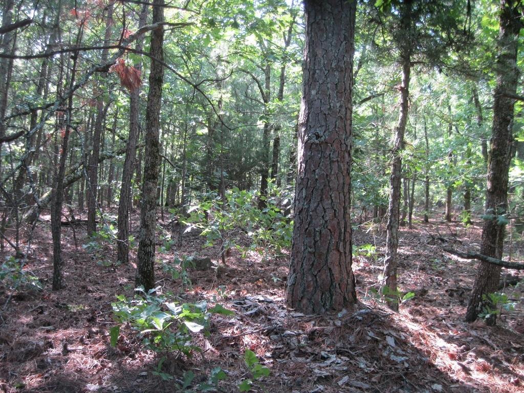 Pending | 80 Acres Remote Hunter's Paradise Clayton, OK 74536 10