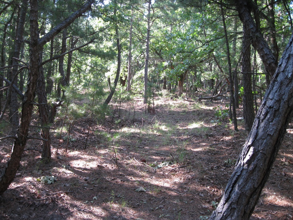 Active | 80 Acres Remote Hunter's Paradise Clayton, OK 74536 11