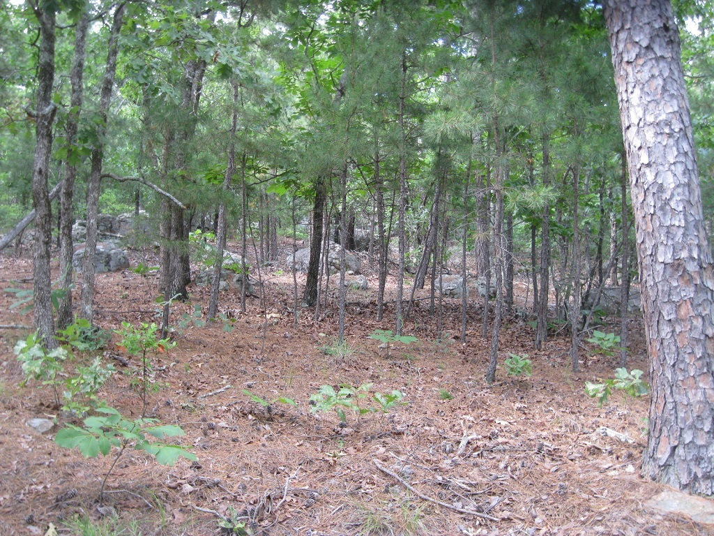 Active | 80 Acres Remote Hunter's Paradise Clayton, OK 74536 2