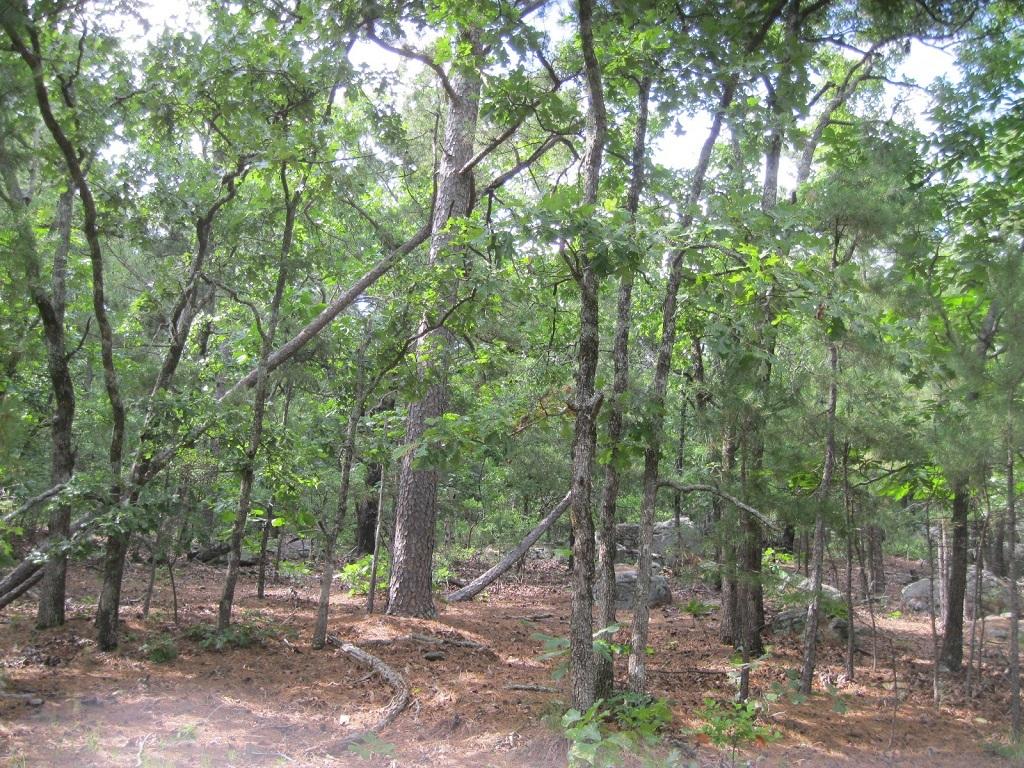 Pending | 80 Acres Remote Hunter's Paradise Clayton, OK 74536 3