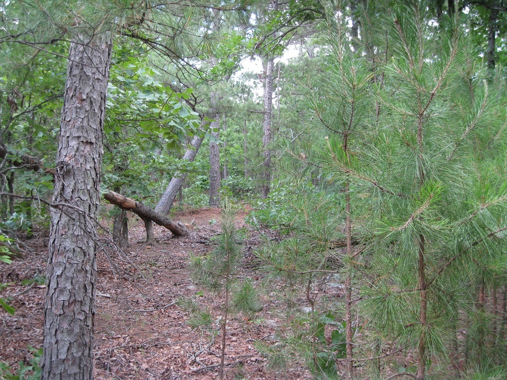 Active | 80 Acres Remote Hunter's Paradise Clayton, OK 74536 4