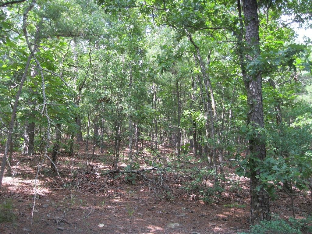 Pending | 80 Acres Remote Hunter's Paradise Clayton, OK 74536 5