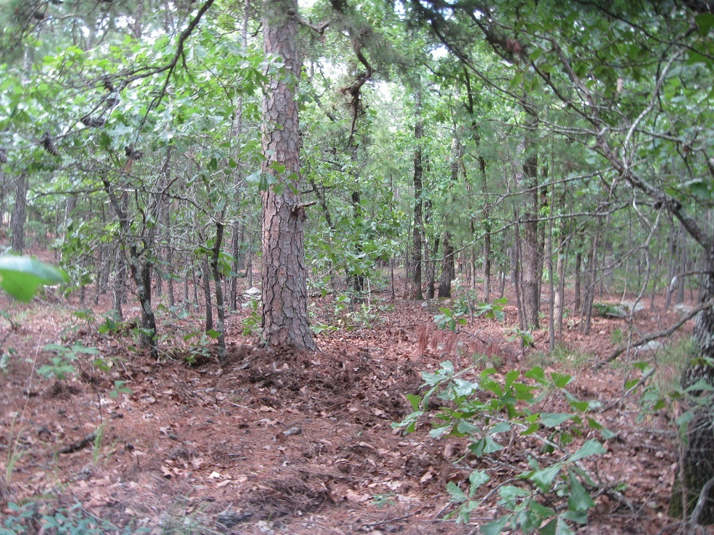 Active | 80 Acres Remote Hunter's Paradise Clayton, OK 74536 6