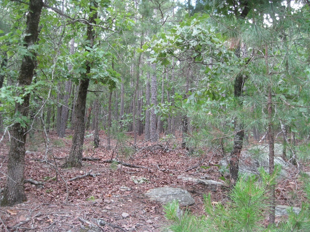 Active | 80 Acres Remote Hunter's Paradise Clayton, OK 74536 7