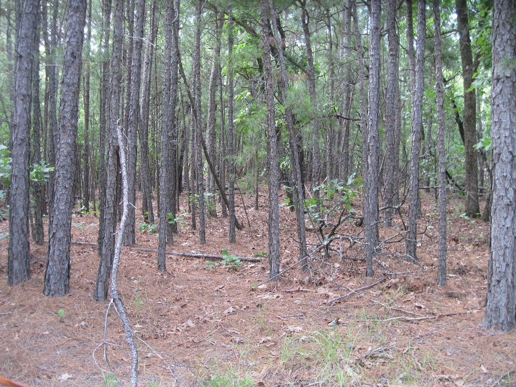 Active | 80 Acres Remote Hunter's Paradise Clayton, OK 74536 8