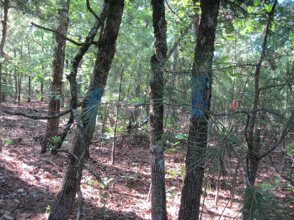 Pending | 80 Acres Remote Hunter's Paradise Clayton, OK 74536 9