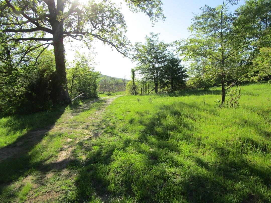 Sold Property | Little River Frontage Nashoba, OK 74558 5